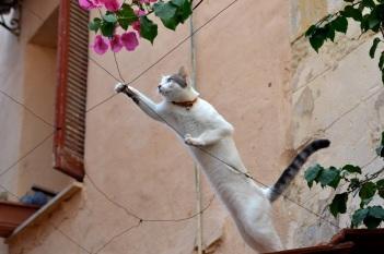 cat rethymnon